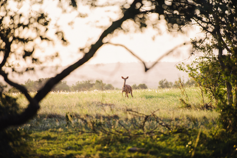 Safari Christmas Web-60.jpg