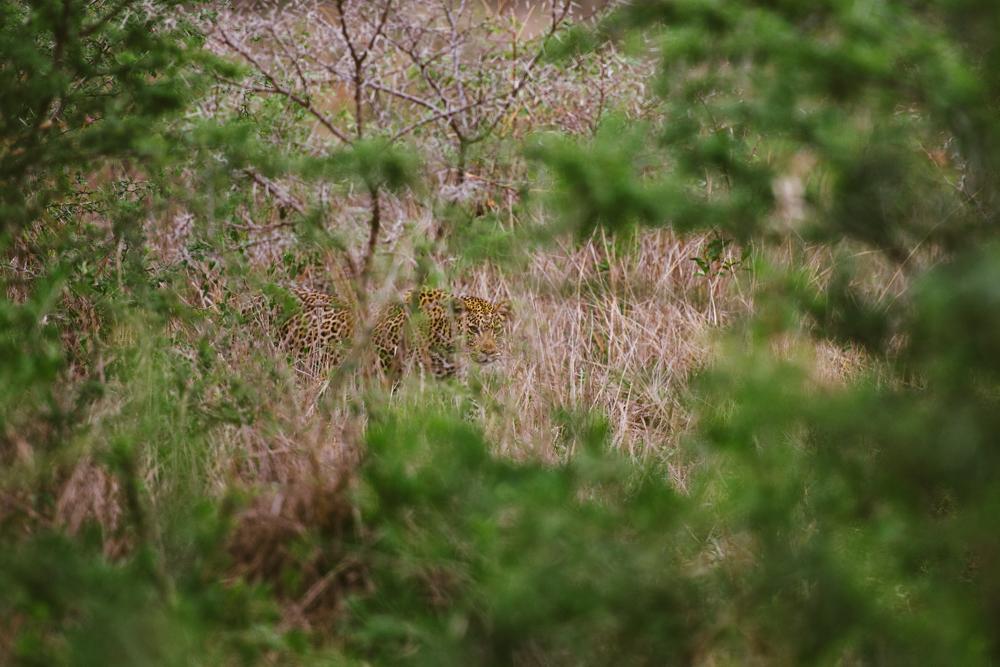 Safari Christmas Web-105.jpg