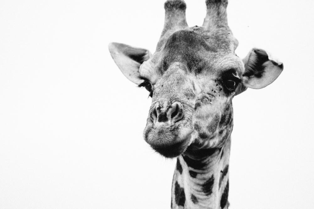 Safari Christmas Web-109.jpg