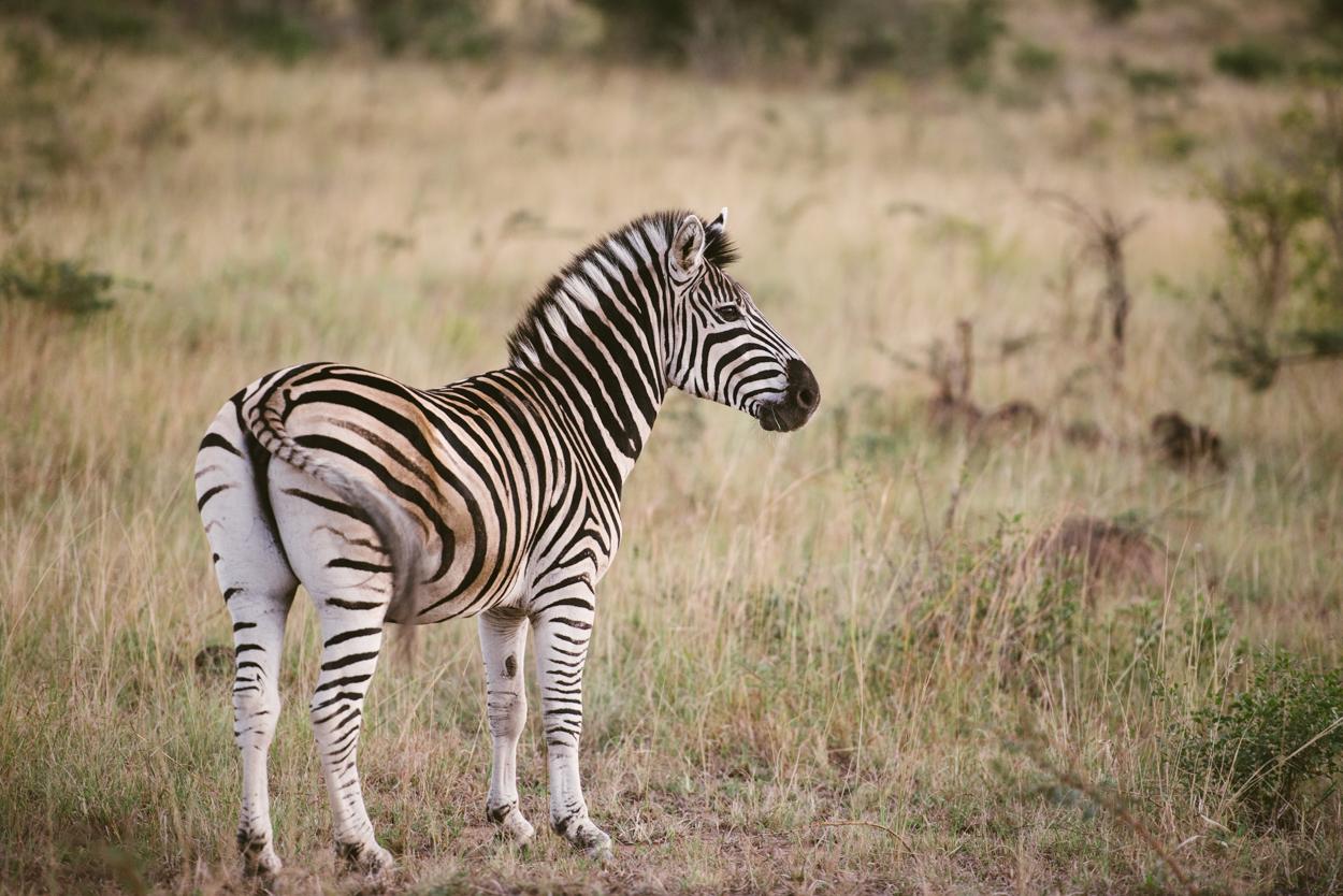 Road Trip & Safari Web-175.jpg