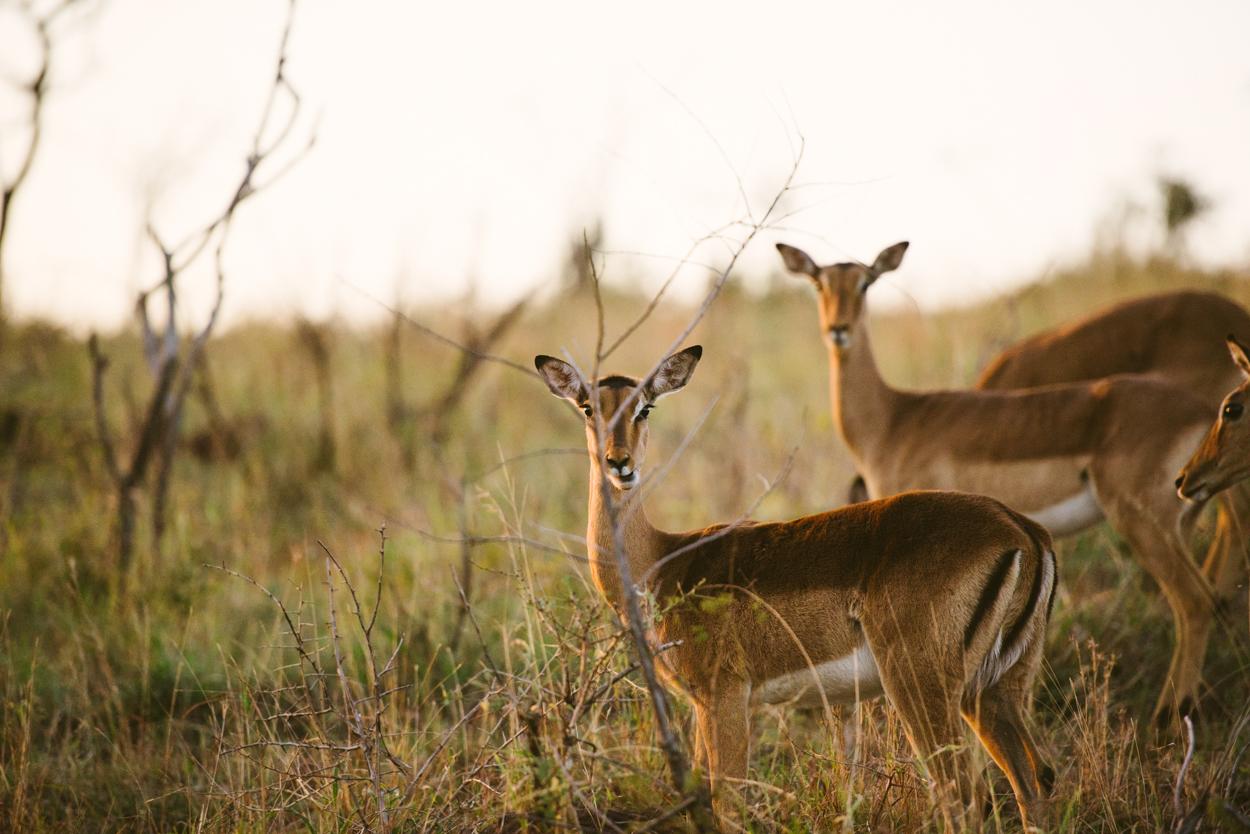 Road Trip & Safari Web-179.jpg