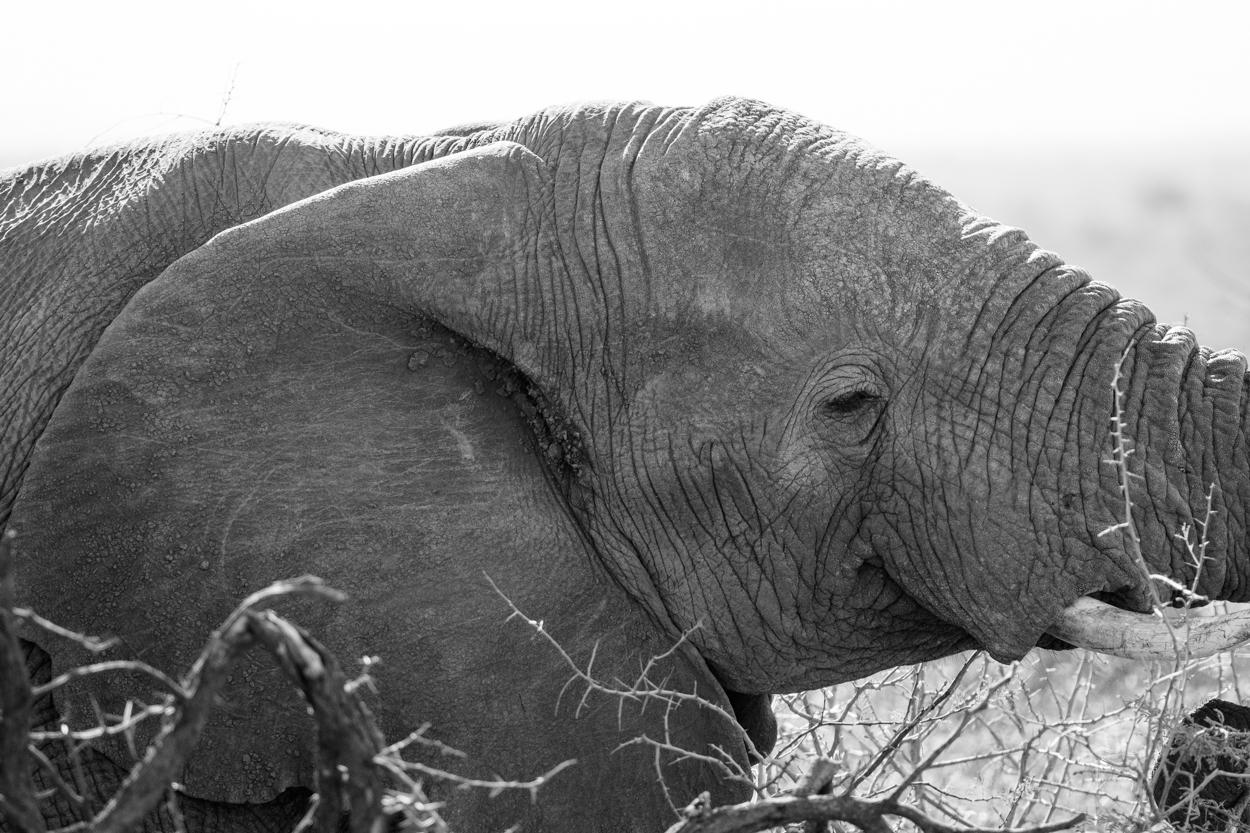 Road Trip & Safari Web-197.jpg