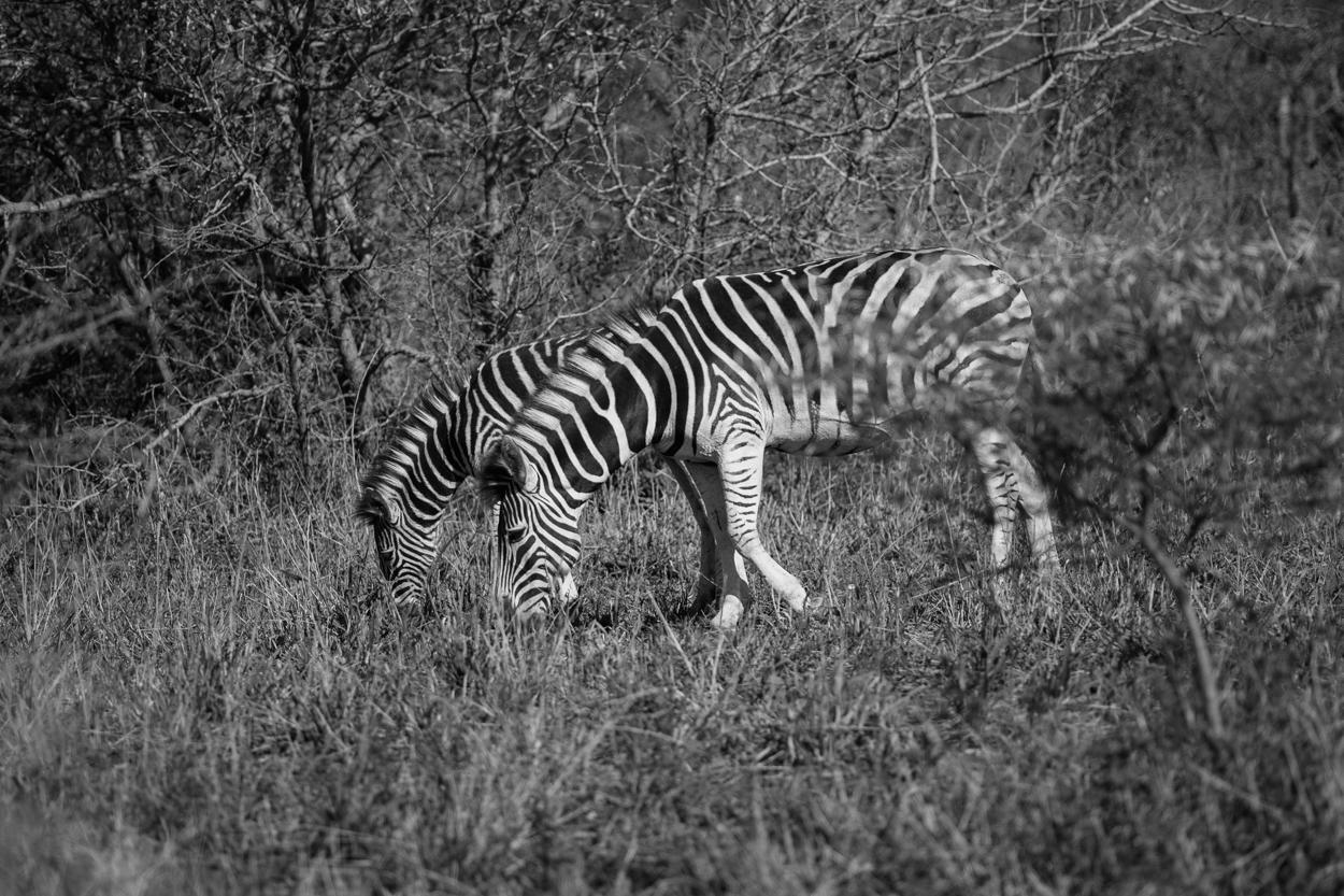 Road Trip & Safari Web-199.jpg