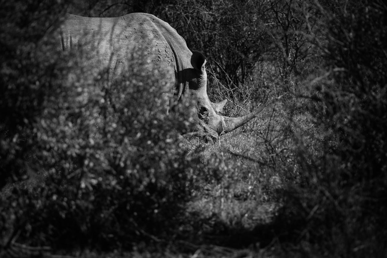 Road Trip & Safari Web-203.jpg
