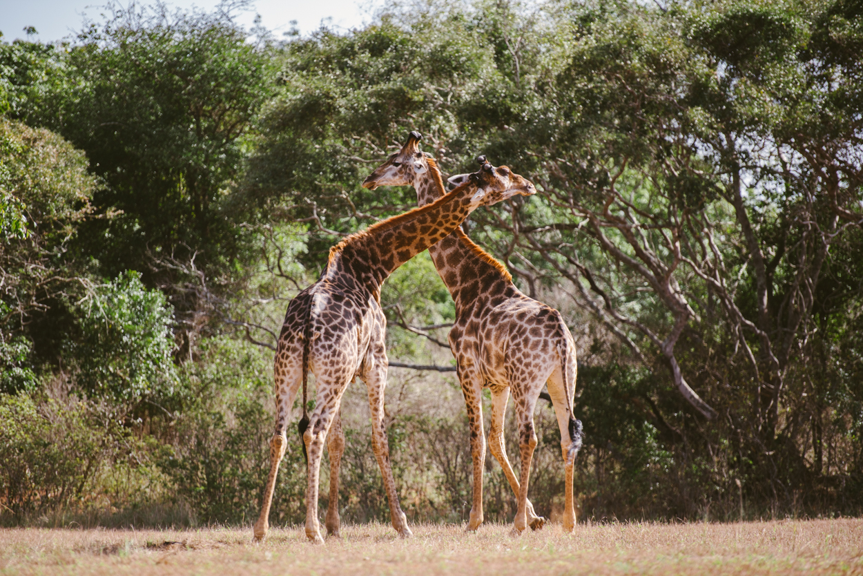 Road Trip & Safari Web-237.jpg