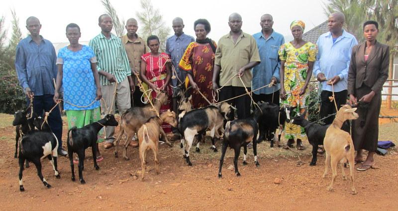 Goats for Rwanda.jpg