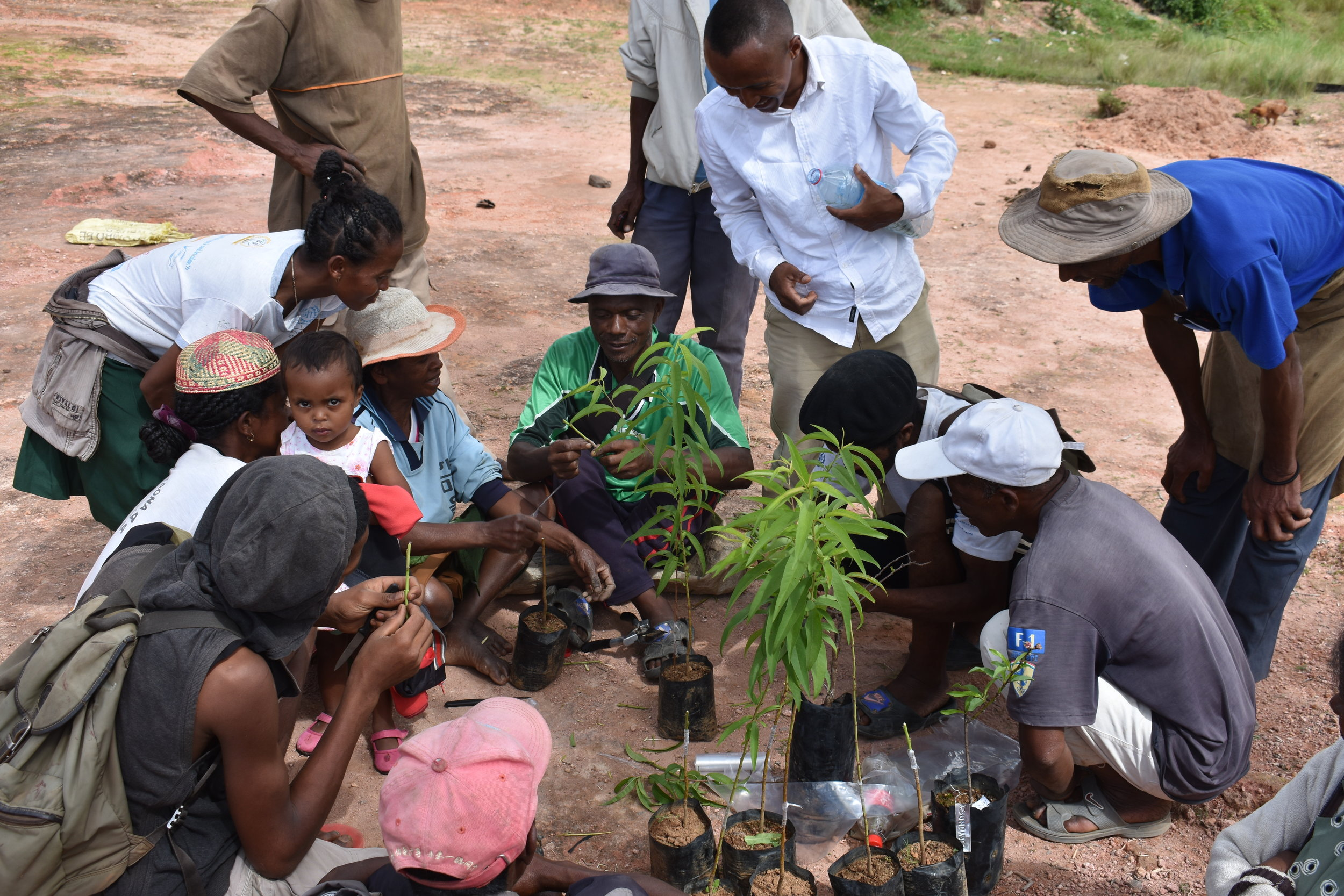 Germain Andrianaivoson (with bottle) helping trainees practice grafting peaches and nectarines