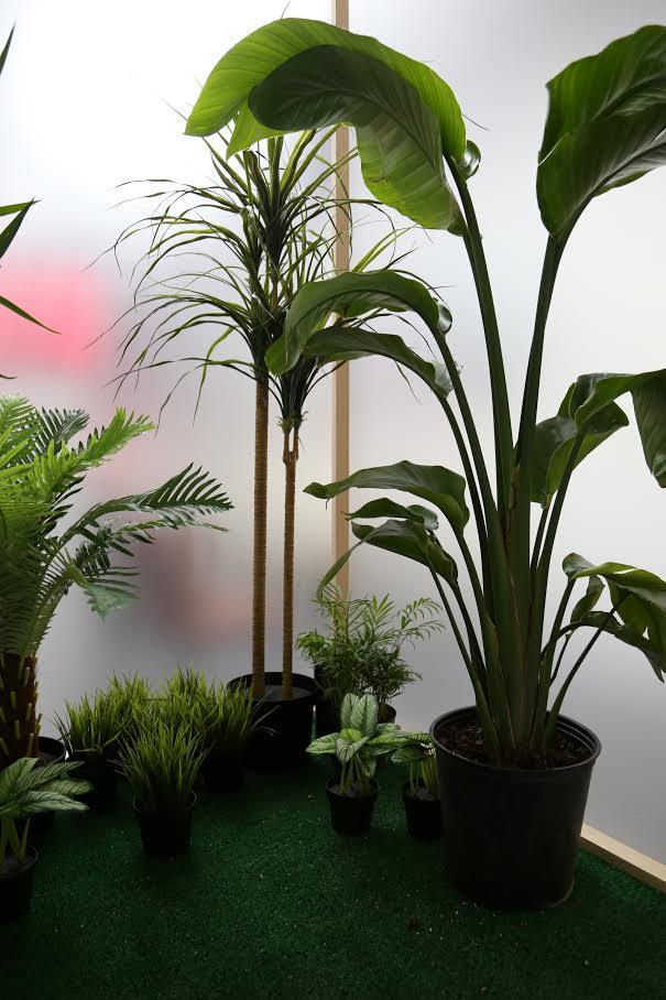 Botanical Shrine (Interior View)