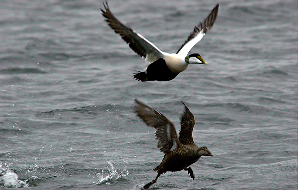 Sårbart miljø.  Fuglelivet ved Mølen er fredet. Mølen har en sårbar geologi, vegetasjon og fauna.