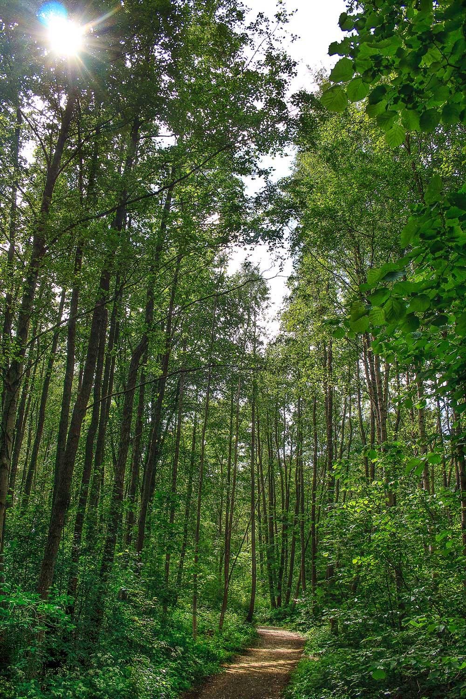 På bildet vises «jungelen»  Grinna,  som er svartorsumpskogen som ligger mellom Herfell og Ula.  Klikk på bildet for å forstørre.