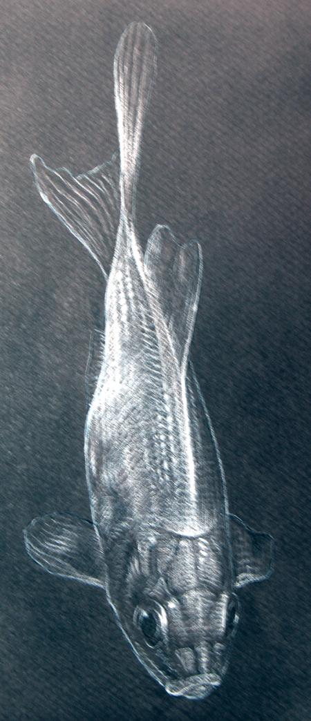 Drawing_goldfish.jpg