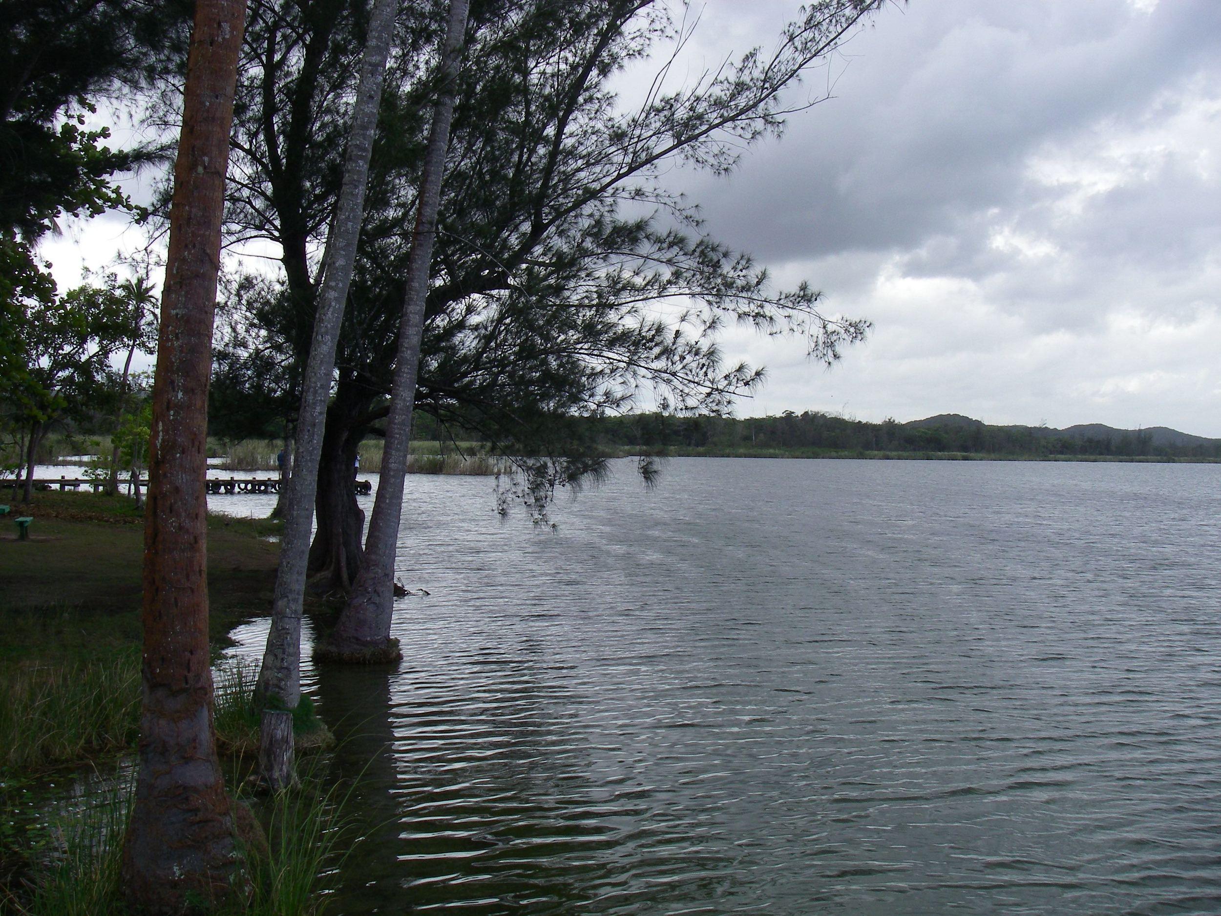 Laguna Tortuguero, Puerto Rico, 2006. Photo credit: Maria A. Caffrey.