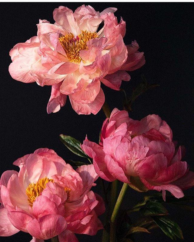 Floral inspiration gold 📷@Putnamflowers