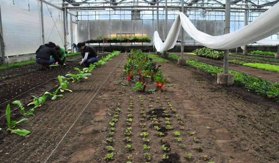 tom-greenhouse.jpg