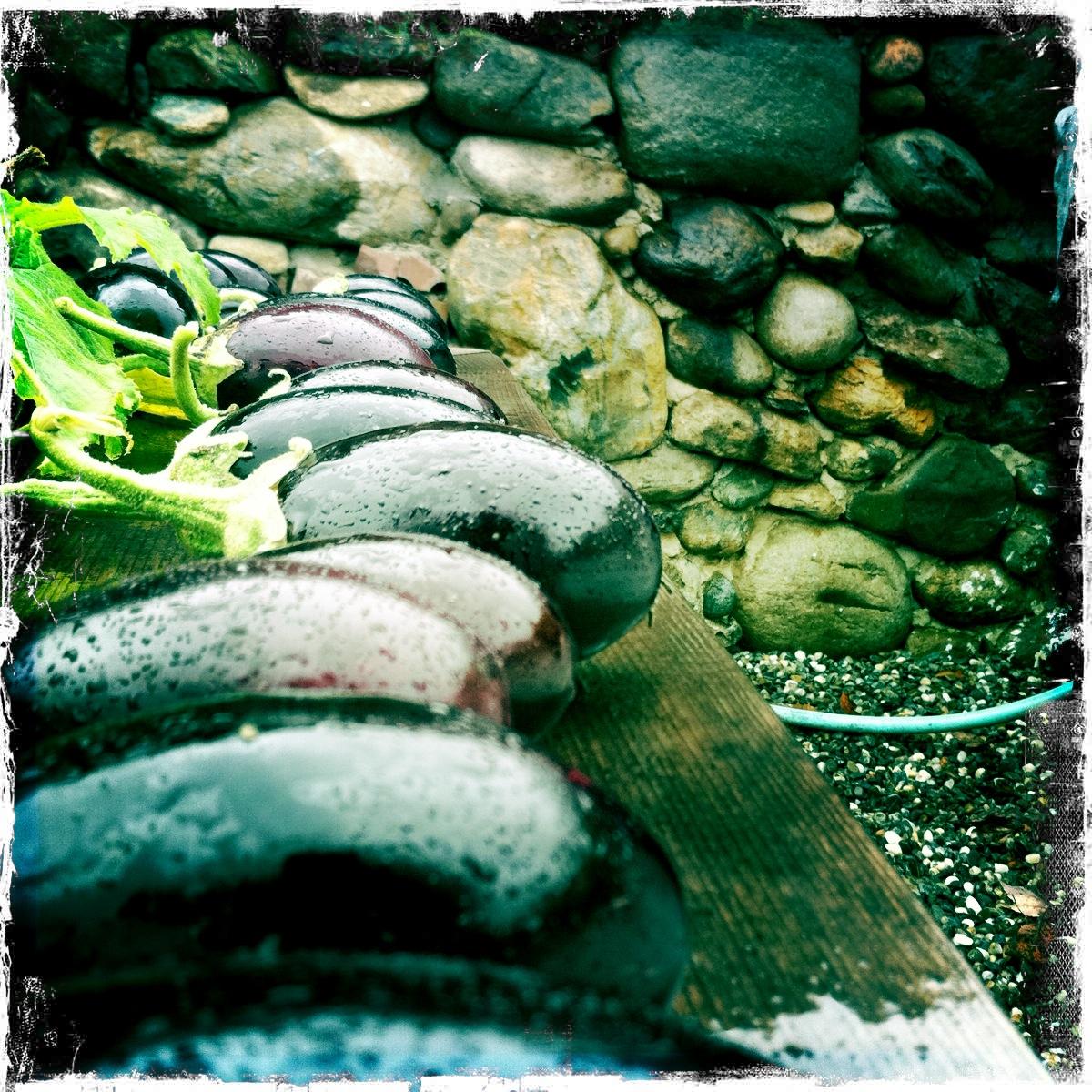 """""""Thea Alvin's Stone Art   The School of Hard Rocks"""" by Julia Shipley, August 27, 2014"""