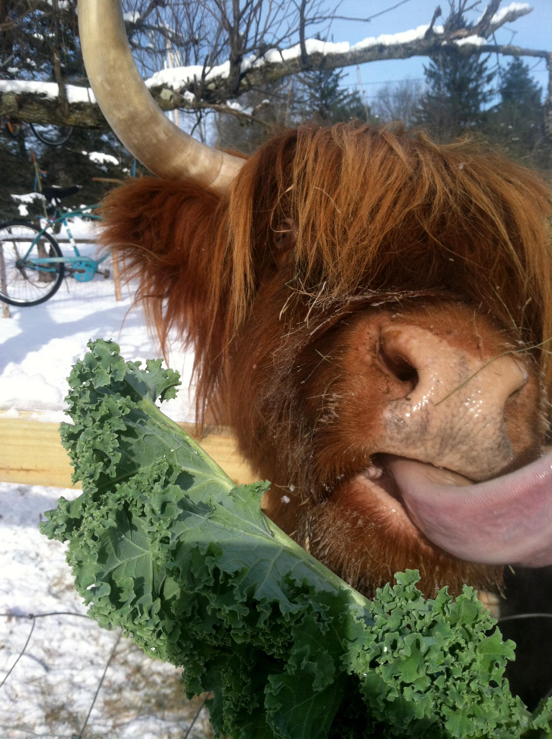 Dolly enjoying kale snacks, 2015