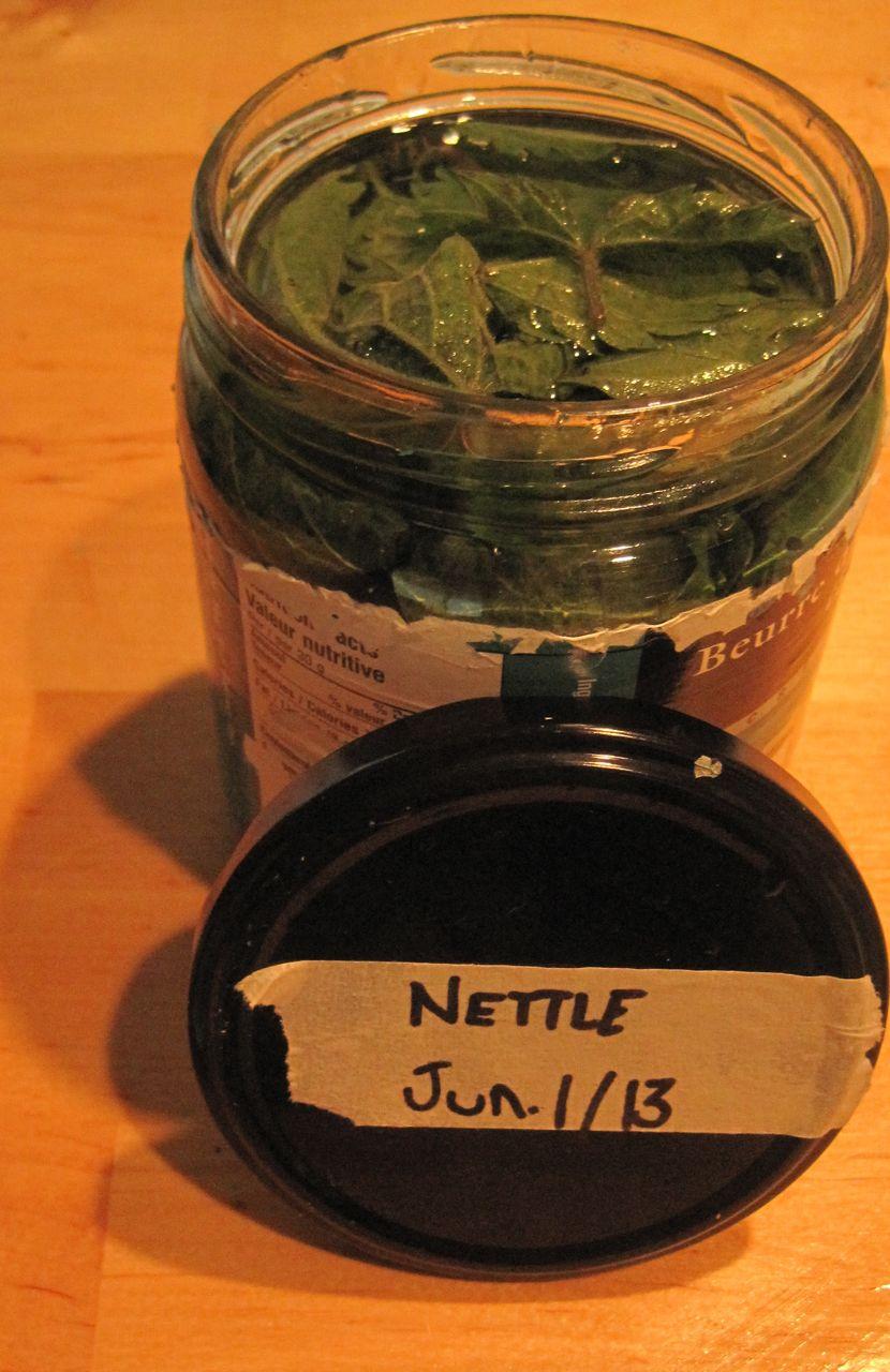 Stinging nettle alcohol tincture