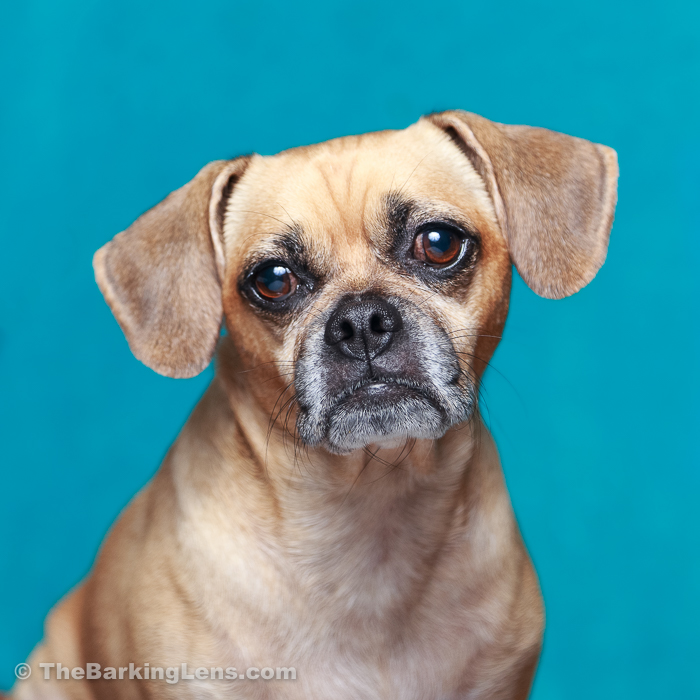Dog-Headshots-WEB-1.jpg