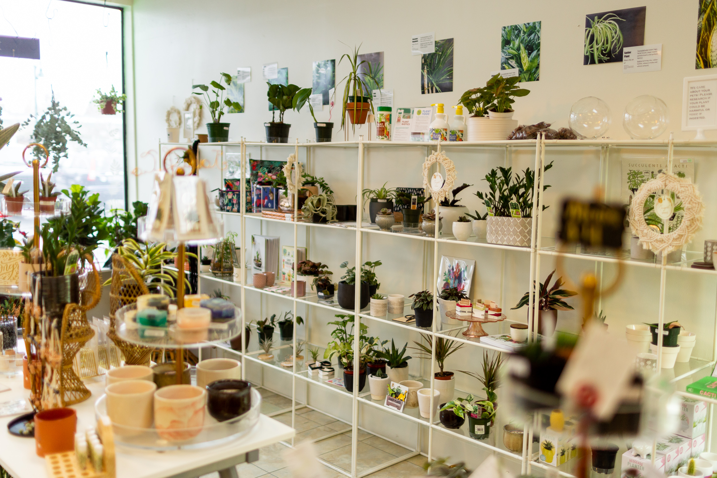 Jade & Co Succulent Boutique Van Gachnang