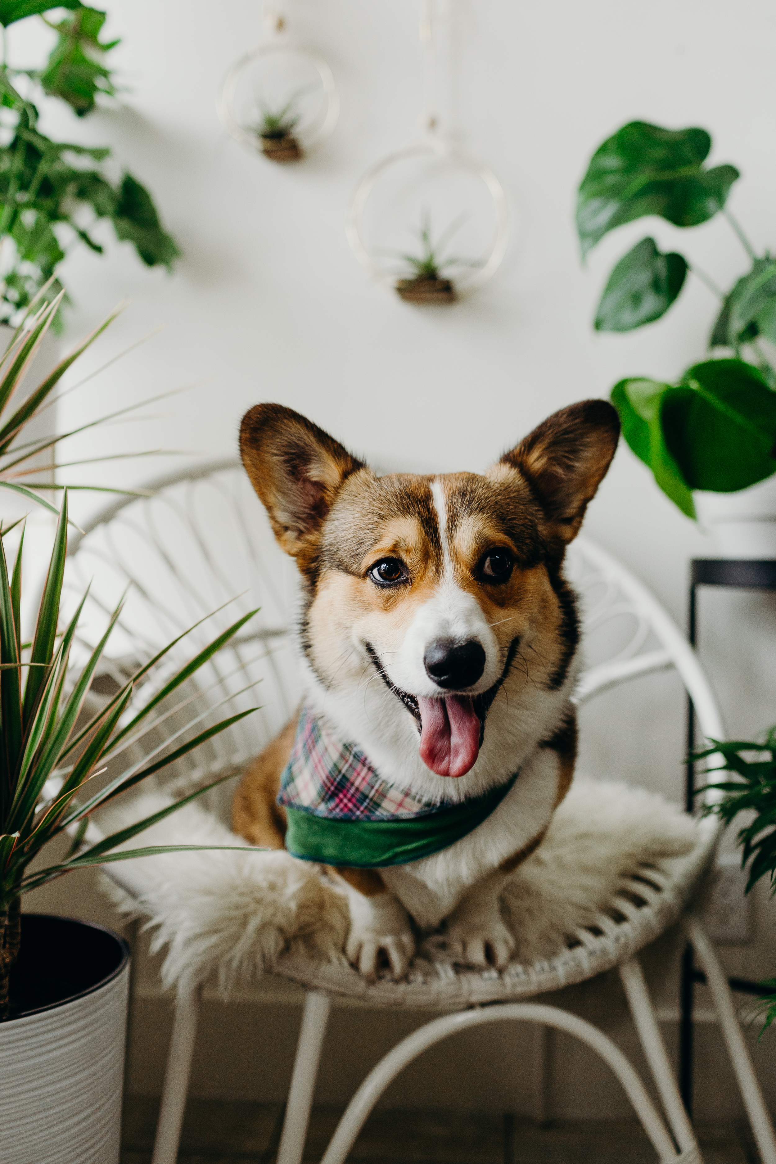 Van Gachnang Photography Jade and Co Succulent Boutique dog photoshoot plants (9).jpg