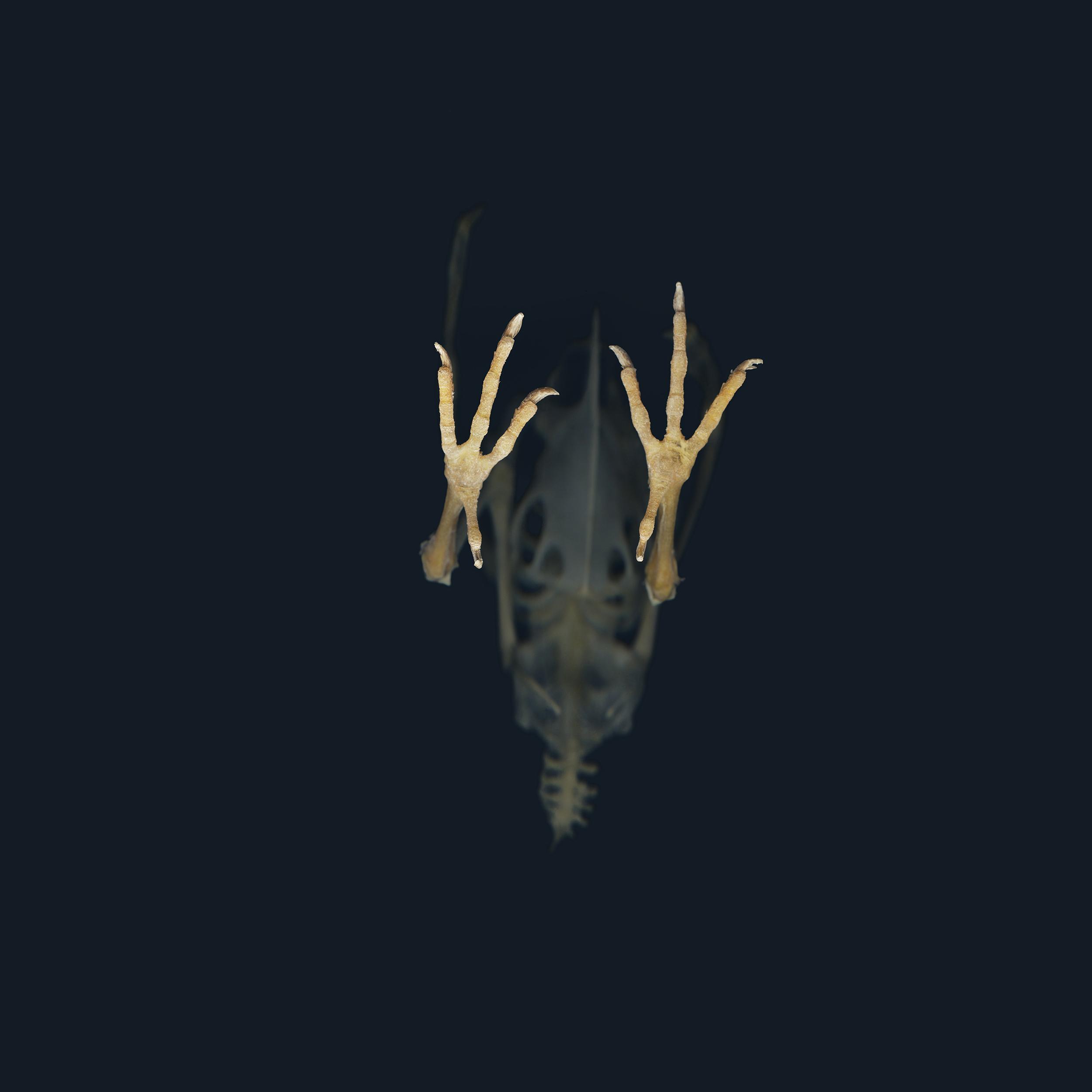 ThompsonJ_SkeletonFeet.jpg