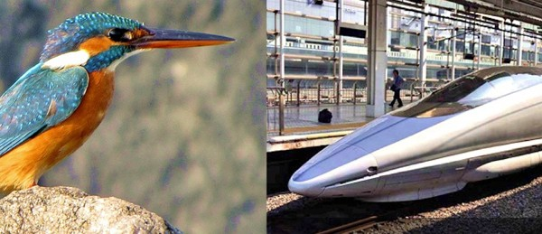 The goal was to cut out the extremely loud claps that occurred when Japan's bullet train emerged from tunnels. Engineers looked toward the kingfisher, which dives seamlessly into water. A nosecone designed after the bird's beak solved the issue.  Photo of train via wikipedia ; photo of kingfisher via Len Blumin