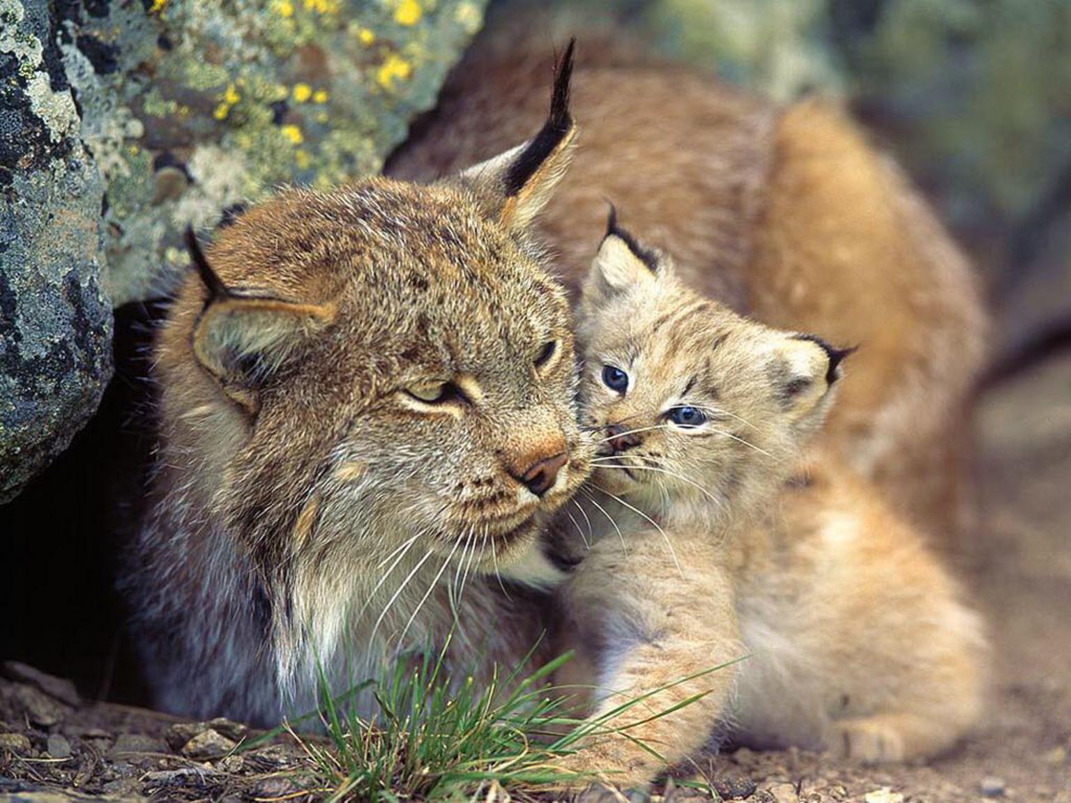 hewan (2).jpg