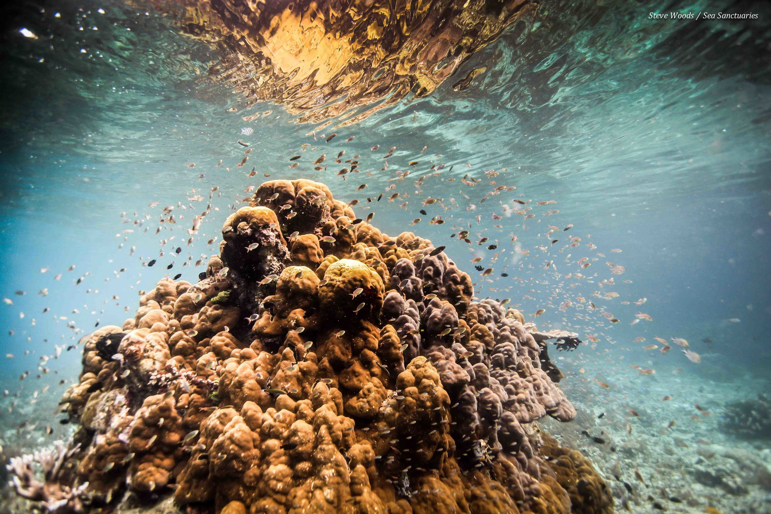 Pristine had coral colonies