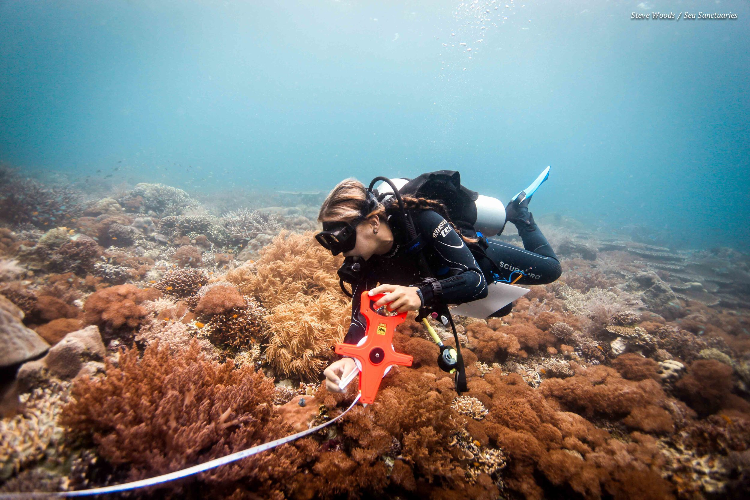 Reef transect survey