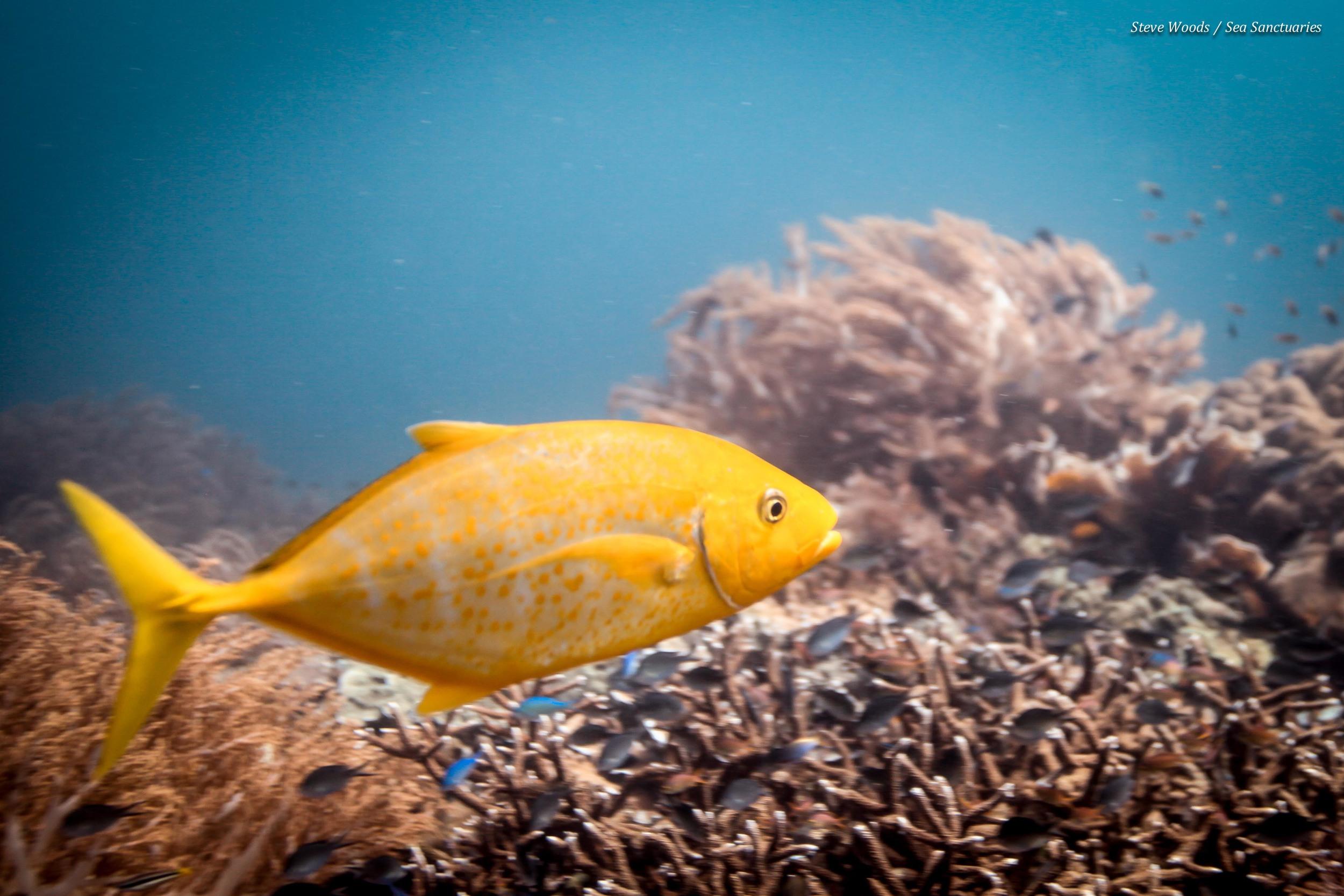 Fish ID techniques  Estimating fish sizes  Survey data collation