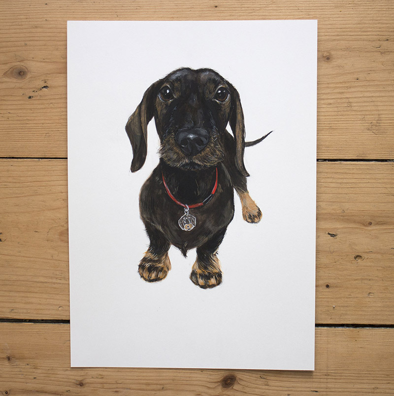 This is Filippo, who passed away not long before I painted his portrait. He was a much-loved Dachshund who lived in Italy.