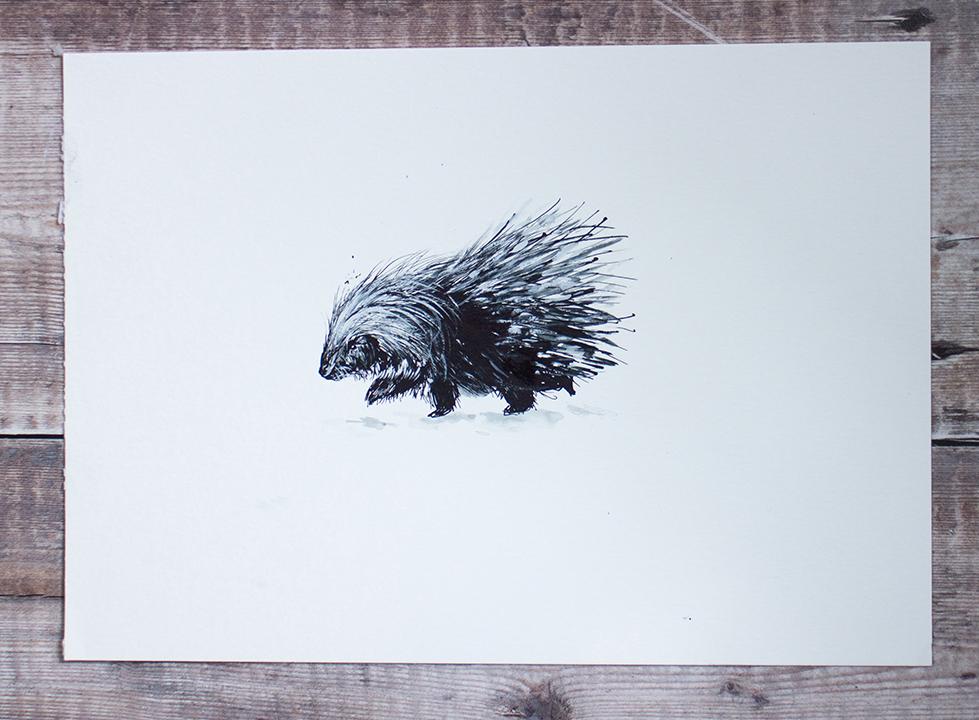 porcupine illustration.jpg