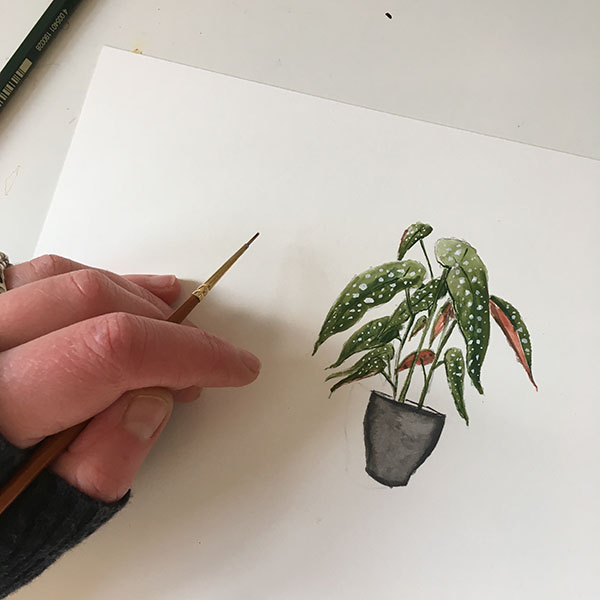 Begonia, almost finished!