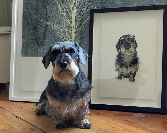 Harris the miniature wire-haired dachshund, with his portrait of his scruffier younger self. Photo from his owner Fiona.