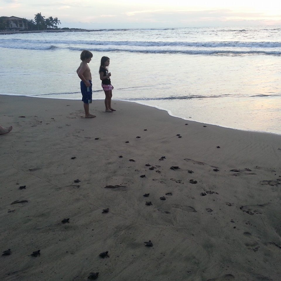 kids on beach with turtles.jpg