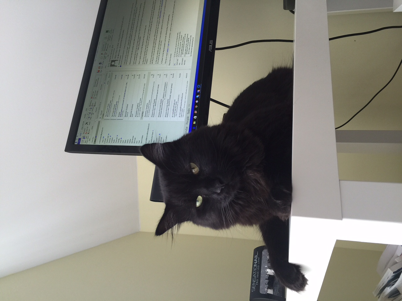 Hemingway enjoying his new desktop digs.