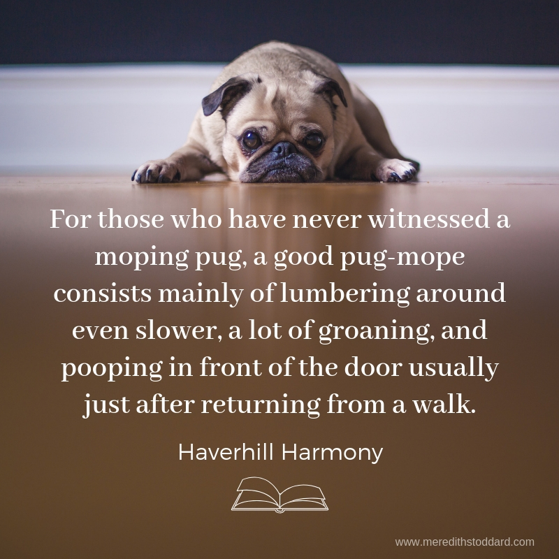 For those who have never witnessed a moping pug, a good pug-mope consists mainly of lumbering around even slower, a lot of groaning and pooping in front of the door usually just after returning from a walk..jpg