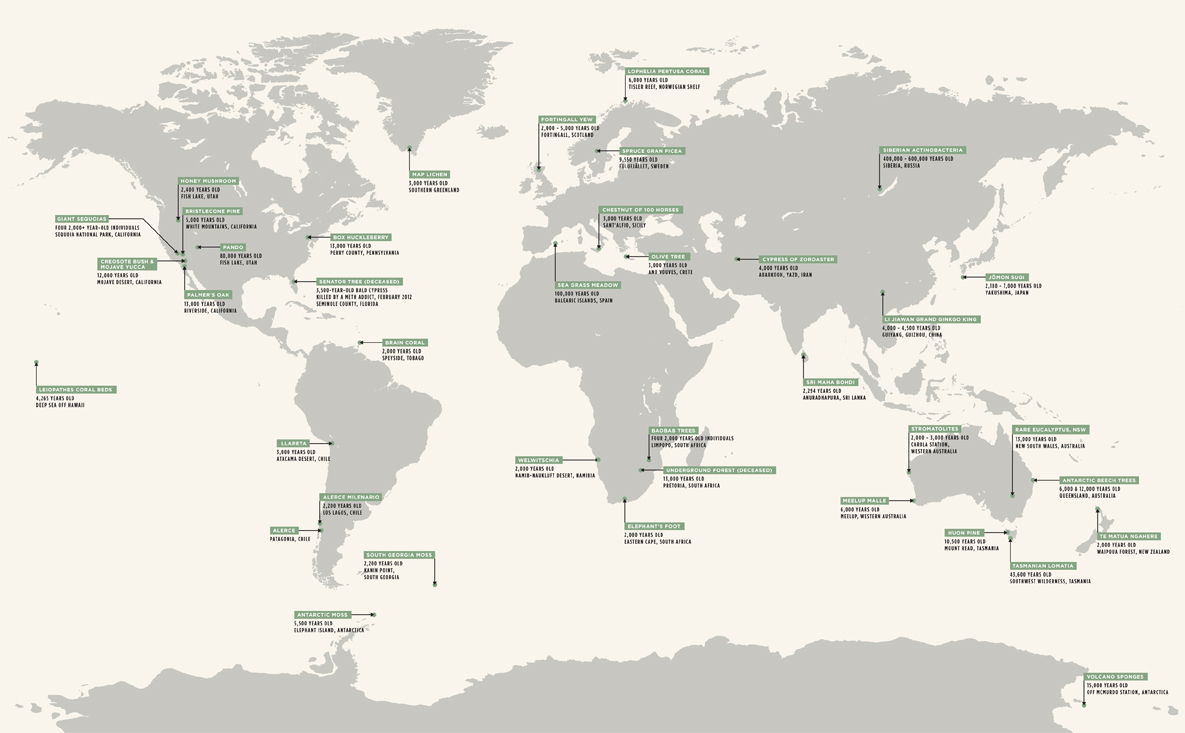 Oldest Living Things World Map by  substudio