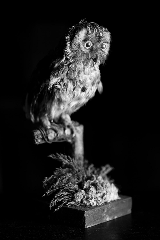 Baby Owl, 2010