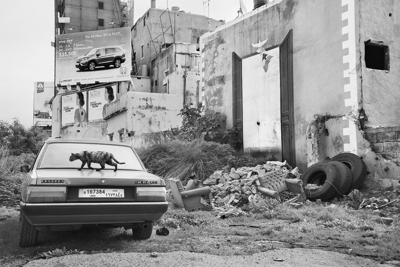 Untitled (Cat), Beirut, Lebanon, 2016   Archival Fiber Inkjet Print  16 x24 inches