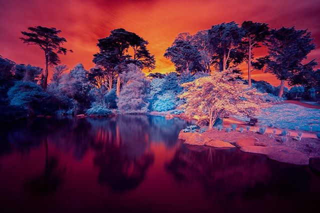 Oh you want cherry blossoms?! Putting the story on pause to make some infrared art in the park. Loooook at those colors 🤩