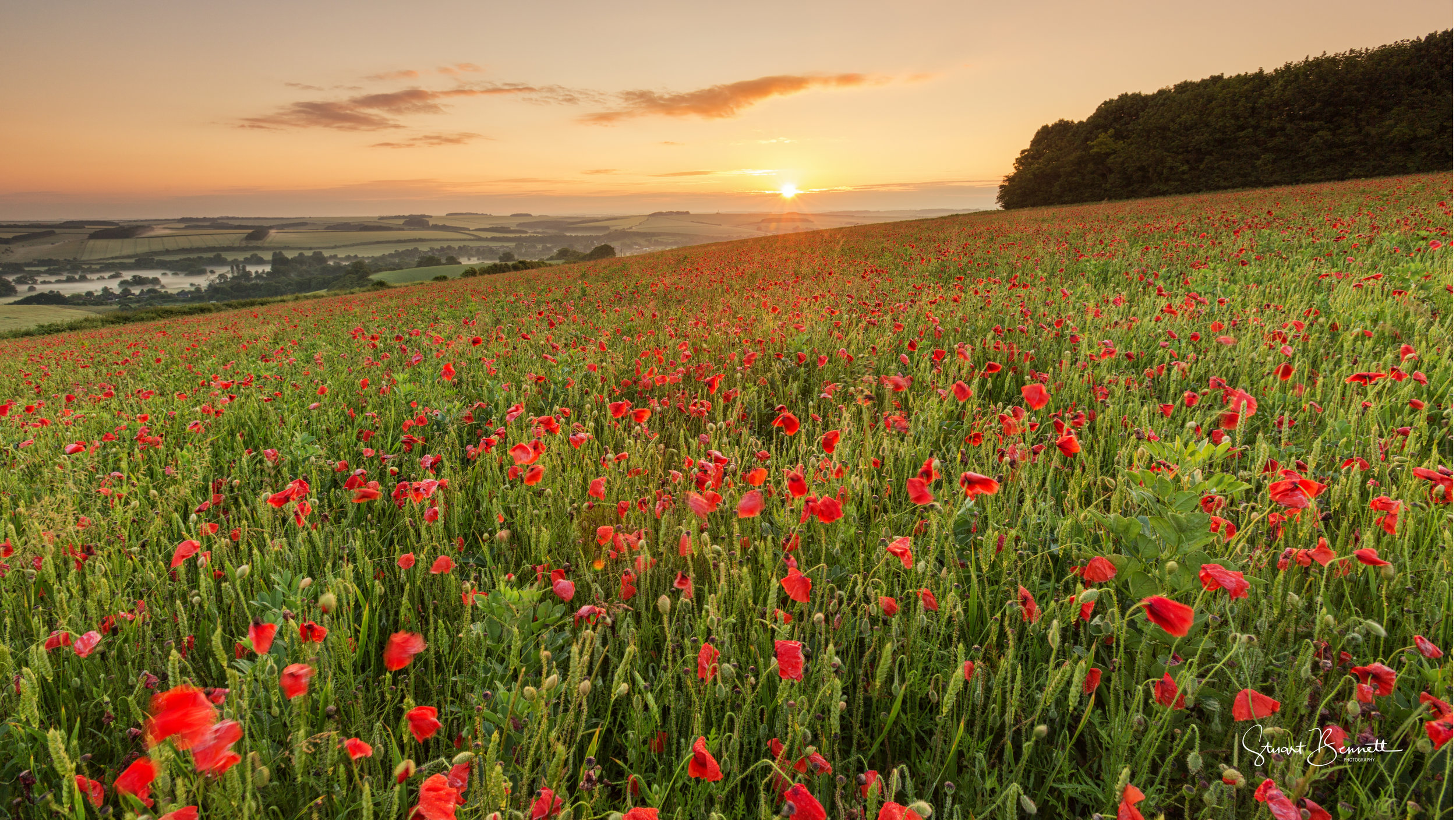 20160626-Salisbury Poppy Field Sunrise.JPG