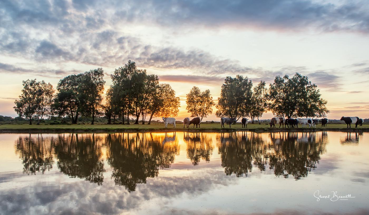 Green Pond - Sunset Drinking session.JPG