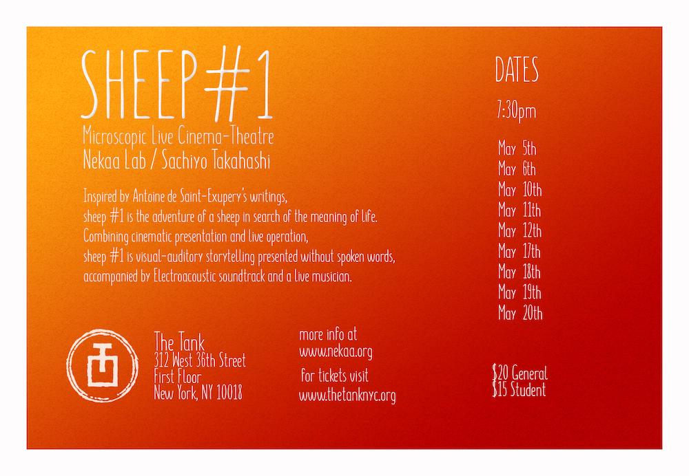 sheep1_back.jpg