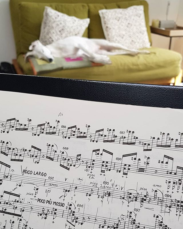 Mollie seems to be enjoying my practice of Schoenberg Violin Concerto! The dissonance has a canine-calming effect... Who would have guessed it?  @bbcsymphonyorchestra @orchidclassicslabel