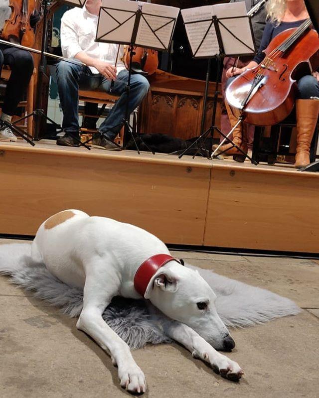 Mollie plays the role of the Wolf in Wolf-Ferrari Kammersinfonie... #OxfordMayMusic @OxfordMayMusic