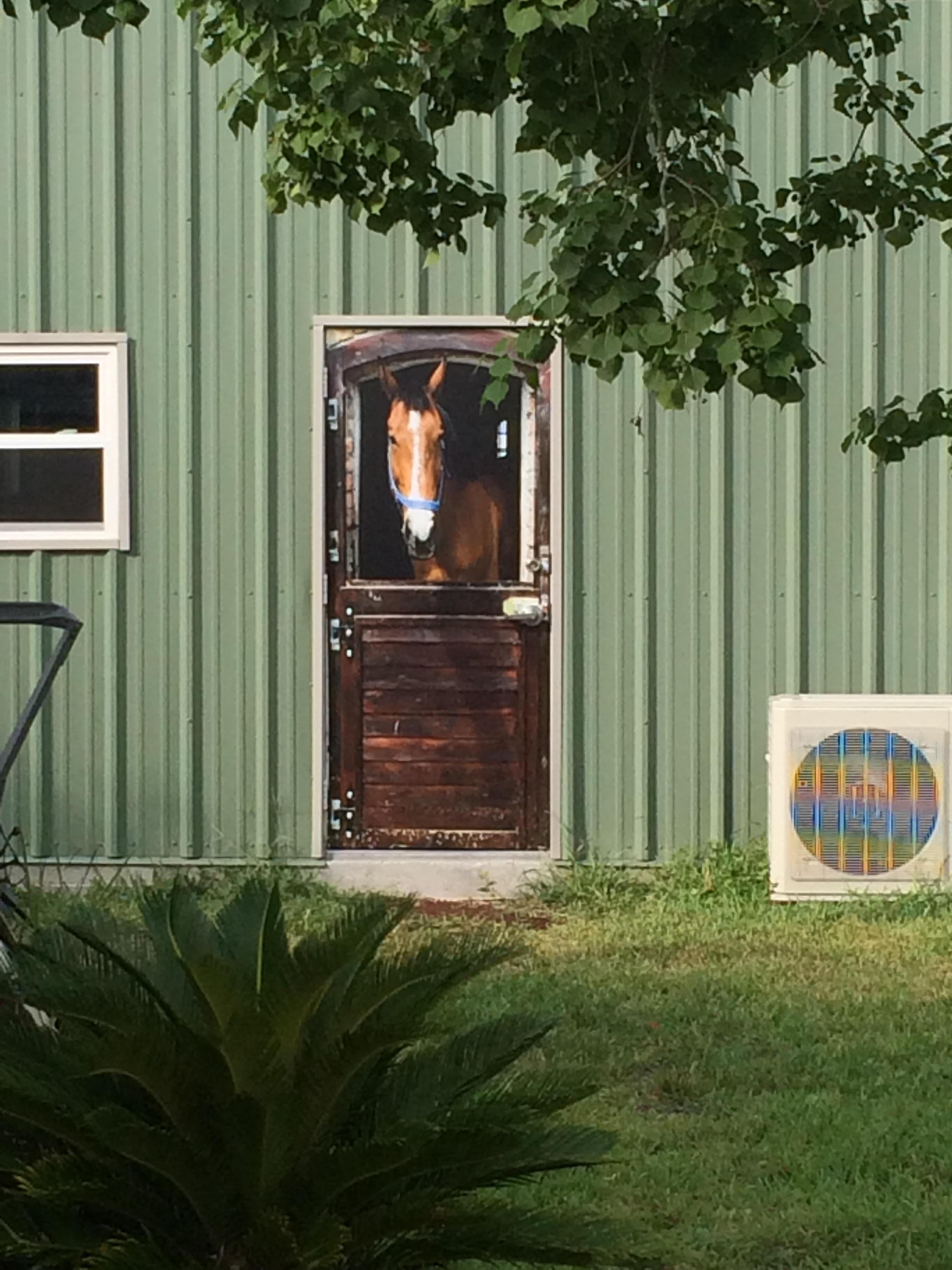 Horse door wrap, Rm wraps, Horse in door, Horse Barn Door