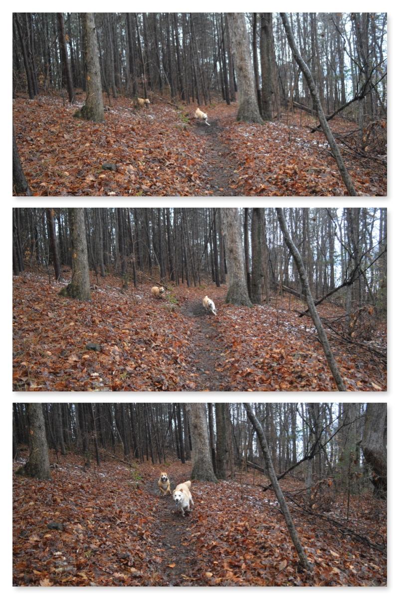 Pups Running 1.jpg