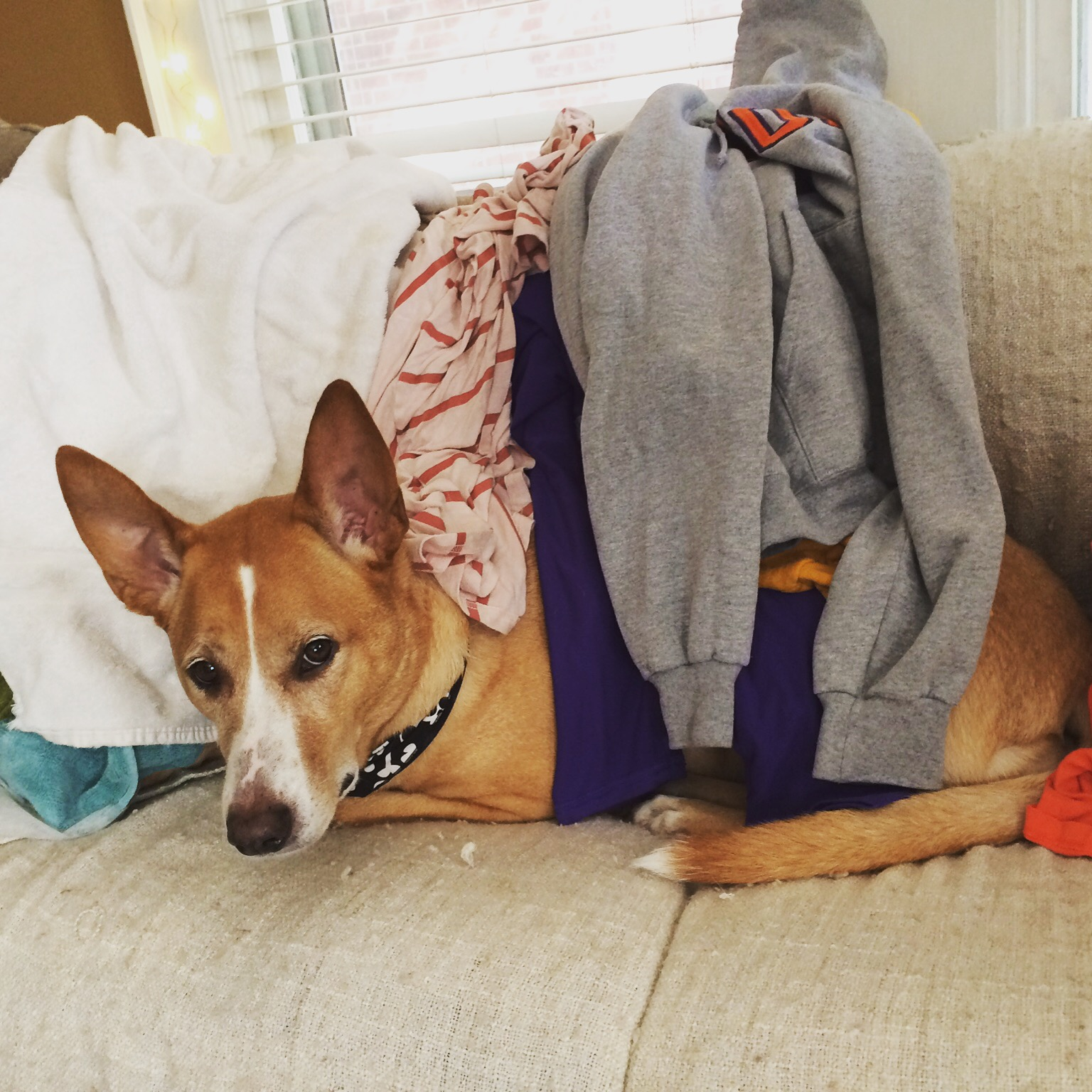 So bored I helped with the laundry.
