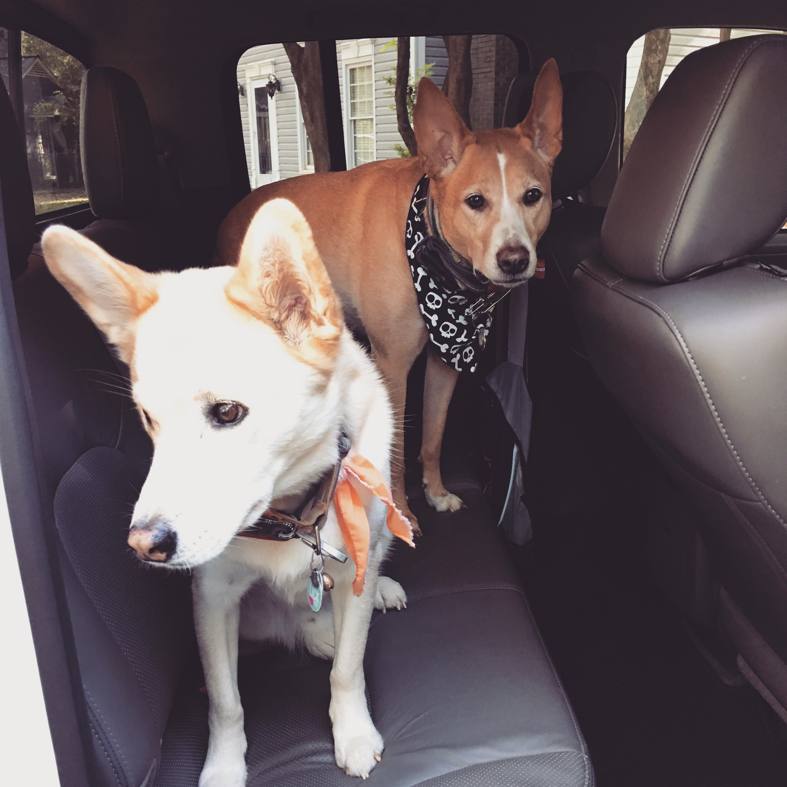 We might have hopped in the truck way before our people were ready to leave, but we waited patiently. :)